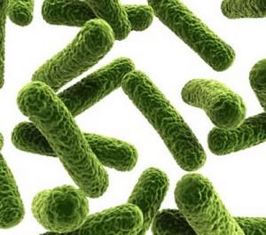 Infezione batterica causa di cistite