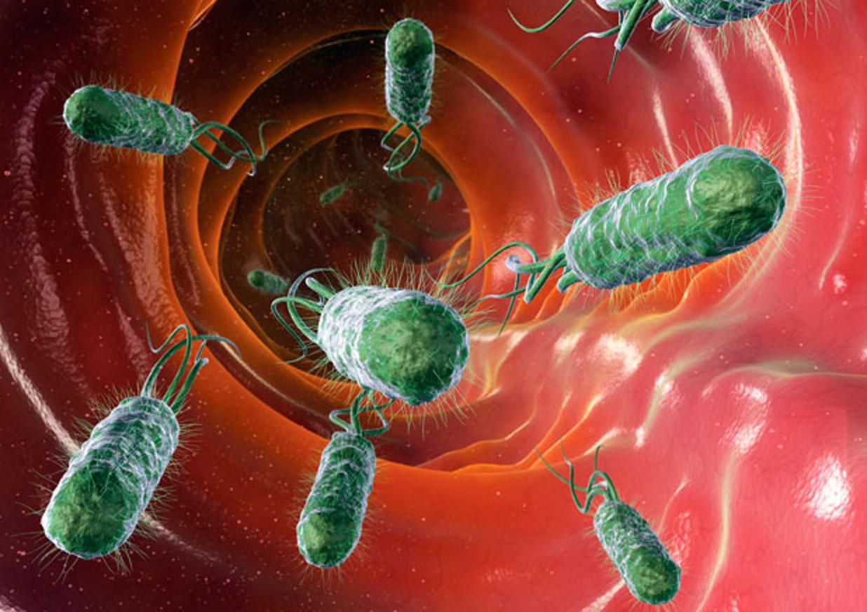 Risultati immagini per cistite batteri